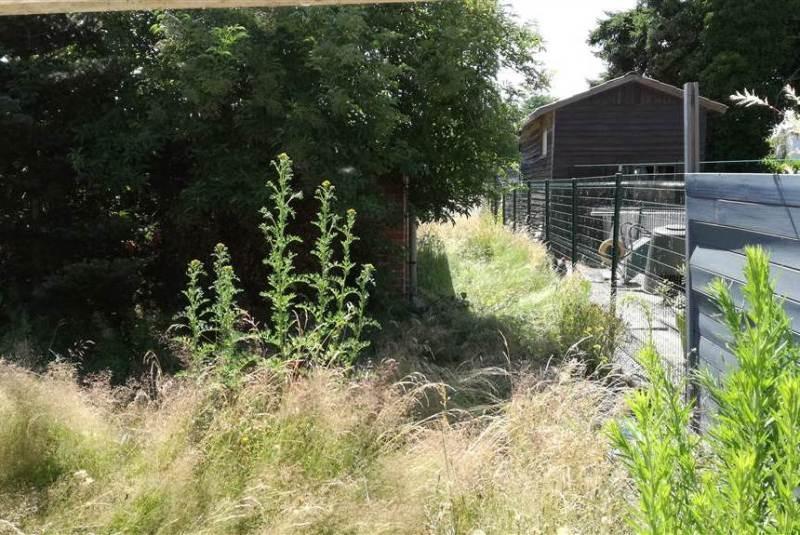 Reihenhaus mit sonnigem Garten